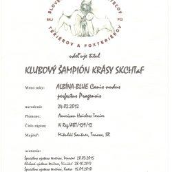 Magie-klubovy-champion-250x250 Albína-Blue Canisnudusperfectus Pragensis