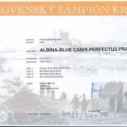Magie-sampion-SR-250x250 Albína-Blue Canisnudusperfectus Pragensis