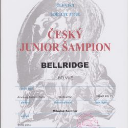 junior-champion-CR-001-250x250 Bellridge Belvue