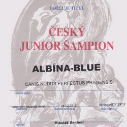 junior-champion-czech-republic-001-250x250 Albína-Blue Canisnudusperfectus Pragensis