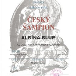 magie-sampion-cr-250x250 Albína-Blue Canisnudusperfectus Pragensis