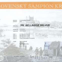 sampion-SR-250x250 Bellridge Belvue