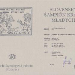 sampion-krasy-mladych-SR-001-250x250 Albína-Blue Canisnudusperfectus Pragensis